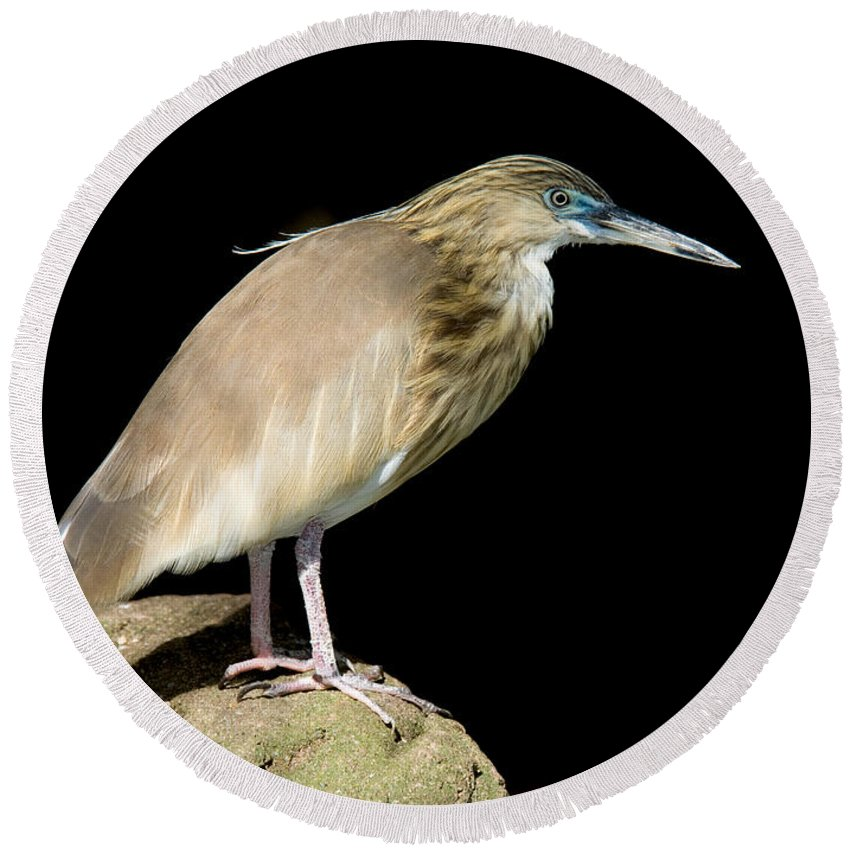 Fauna Round Beach Towel featuring the photograph Pond Heron by Anthony Mercieca