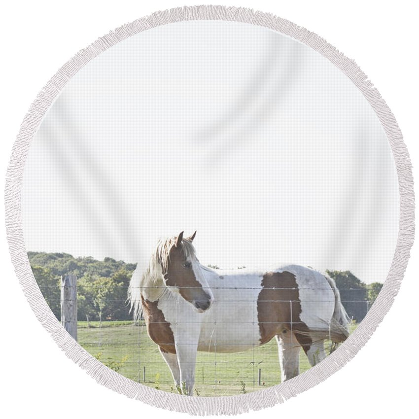 Pony Round Beach Towel featuring the photograph Pony Pride by Traci Cottingham