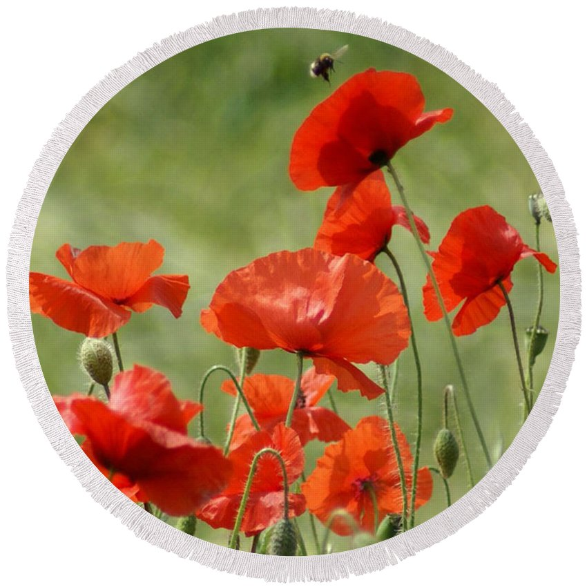Poppies Round Beach Towel featuring the photograph Poppies 1 by Carol Lynch