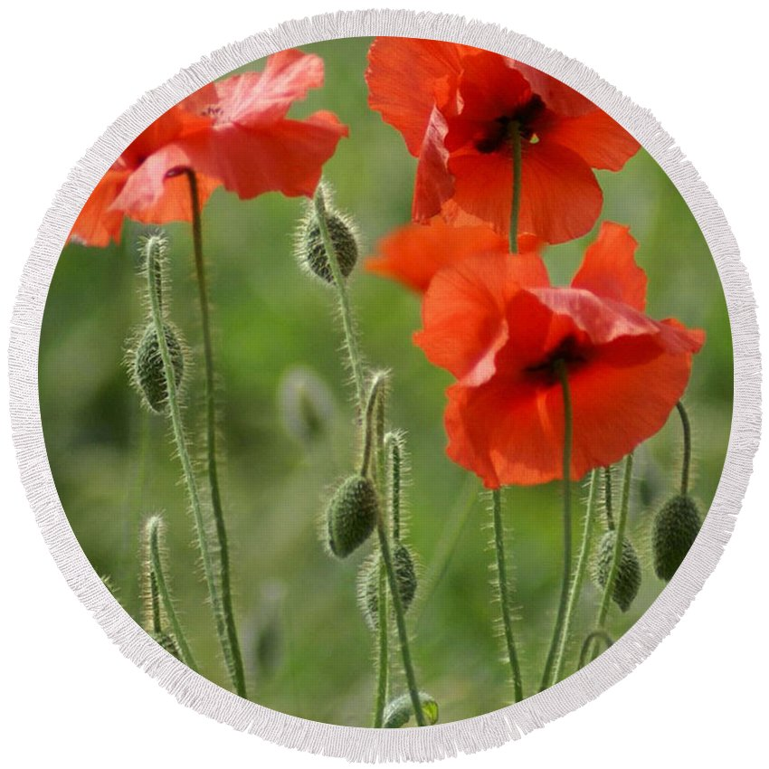 Poppies Round Beach Towel featuring the photograph Poppies 2 by Carol Lynch
