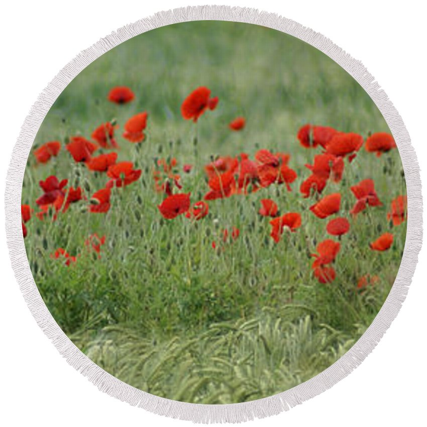 Poppies Round Beach Towel featuring the photograph Poppies by Carol Lynch