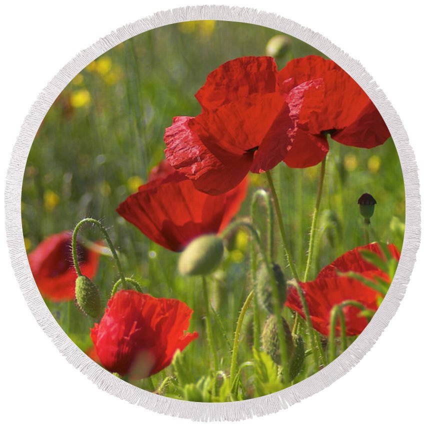 Poppies Round Beach Towel featuring the photograph Poppies In Yorkshire by David Hare