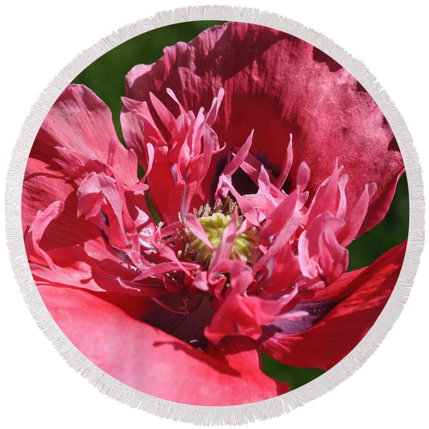Remembrance Round Beach Towel featuring the photograph Poppy Pink by Jim Hogg