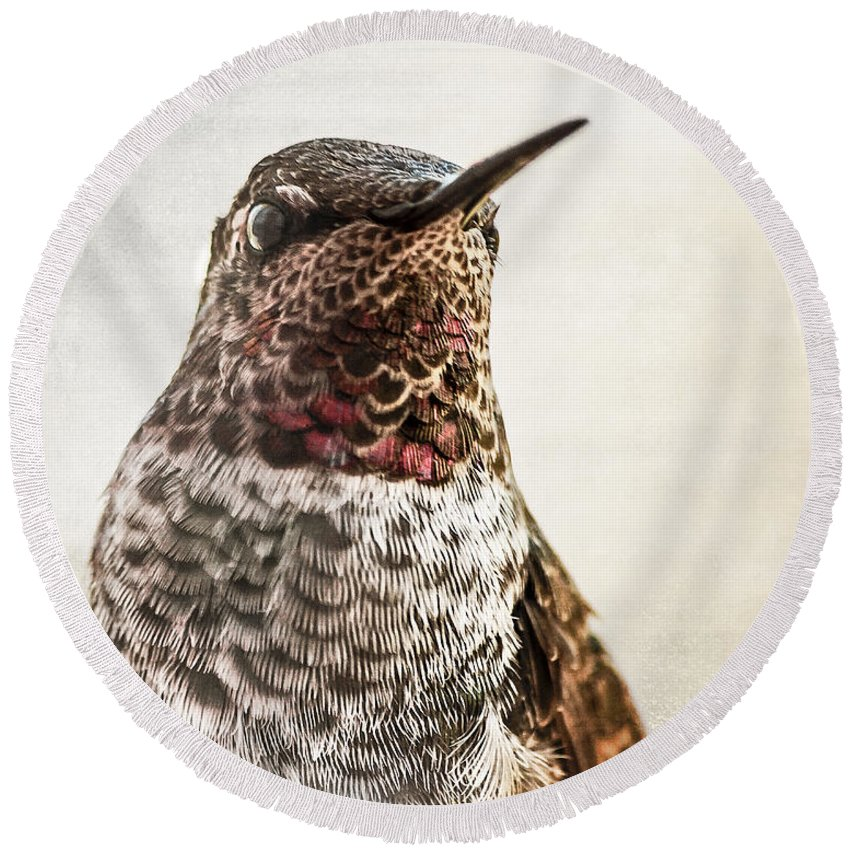 Hummingbird Round Beach Towel featuring the photograph Portrait Of A Hummer by Caitlyn Grasso
