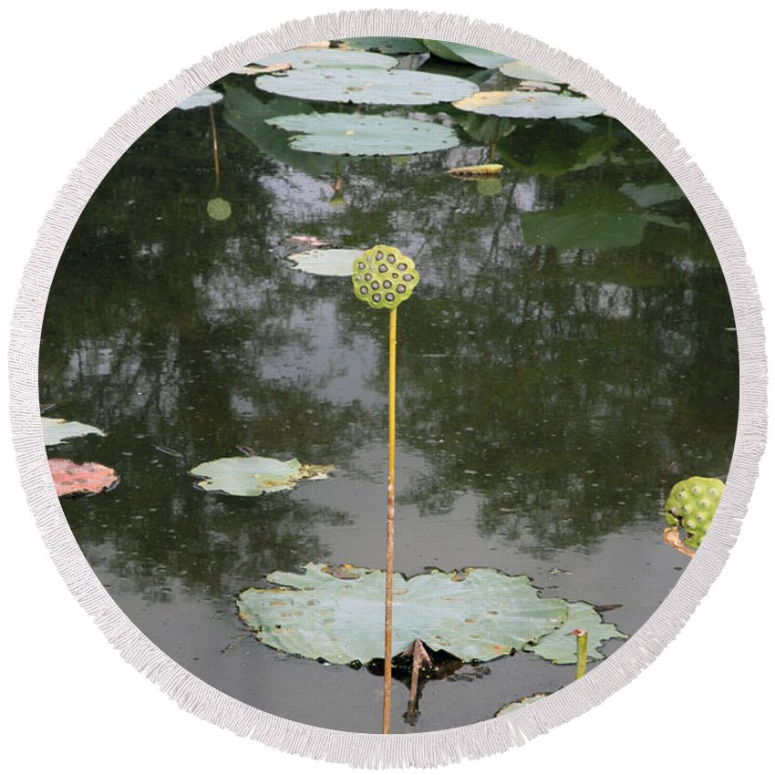 Lotus Round Beach Towel featuring the photograph Post Bloom by Amanda Barcon