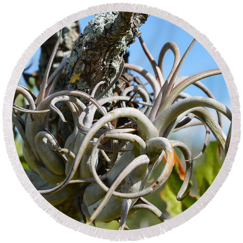 Airplant Round Beach Towel featuring the photograph Potbelly Airplant by Olga Hamilton