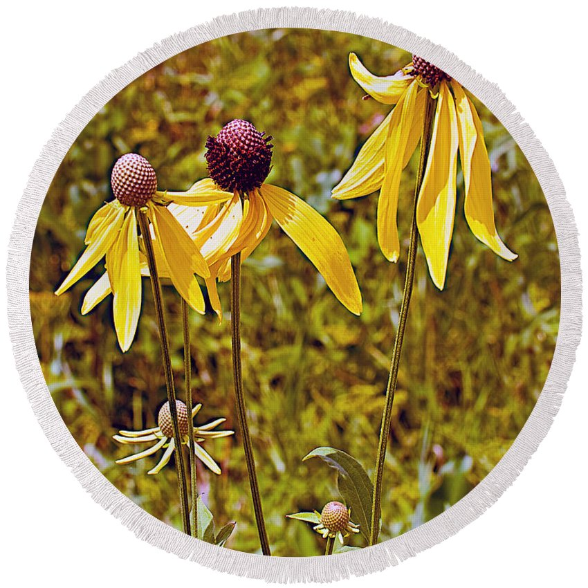 Prairie Coneflowers In Pipestone National Monument Round Beach Towel featuring the photograph Prairie Coneflowers In Pipestone National Monument-minnesota by Ruth Hager
