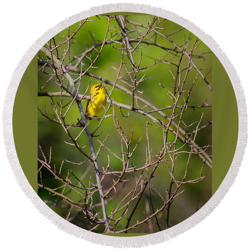 Warbler Round Beach Towel featuring the photograph Prairie Warbler by Bill Wakeley