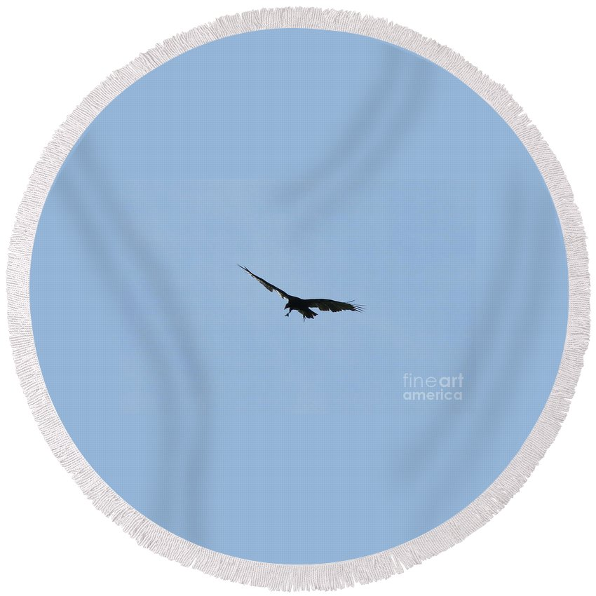 Vulture Round Beach Towel featuring the photograph Pre-capture by Neal Eslinger