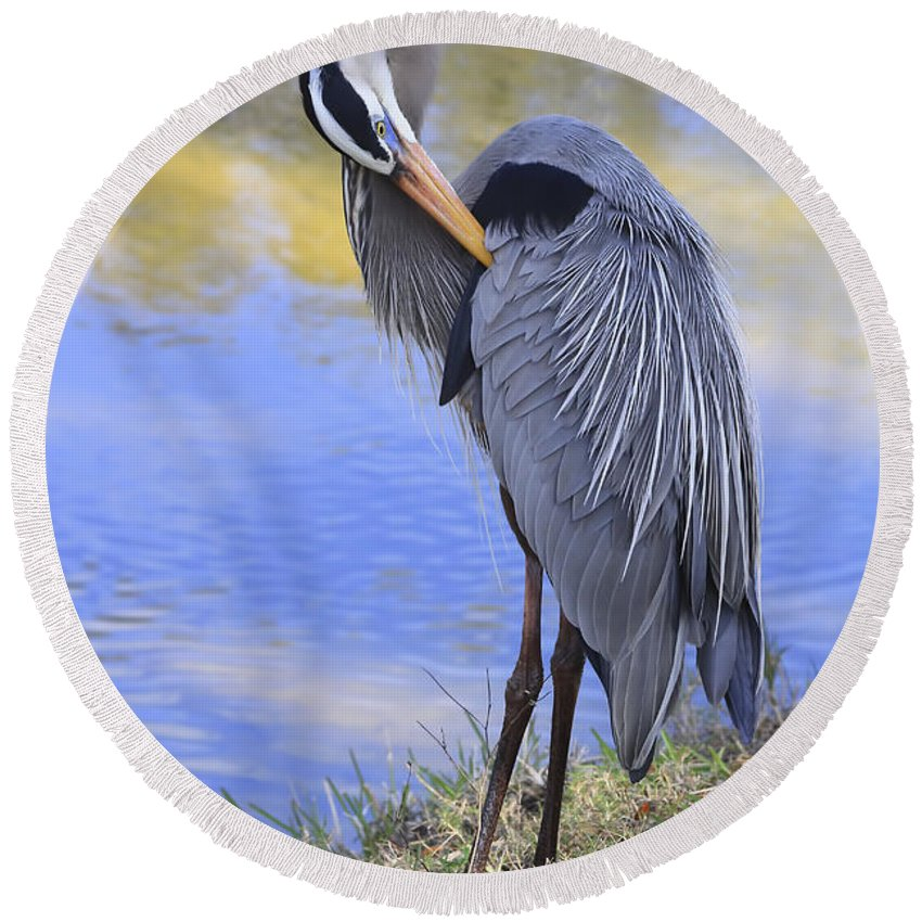 Blue Heron Round Beach Towel featuring the photograph Preening By The Pond by Deborah Benoit