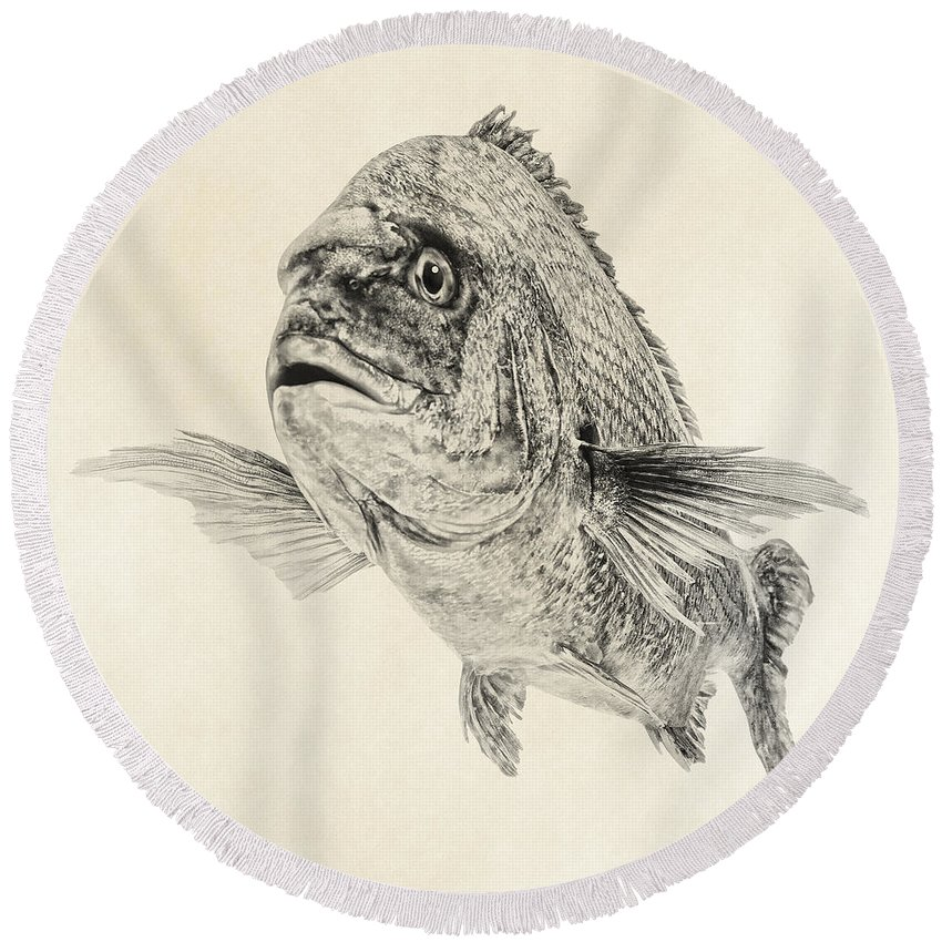 Fish Art Round Beach Towel featuring the digital art Preoccupied by Olga Hamilton