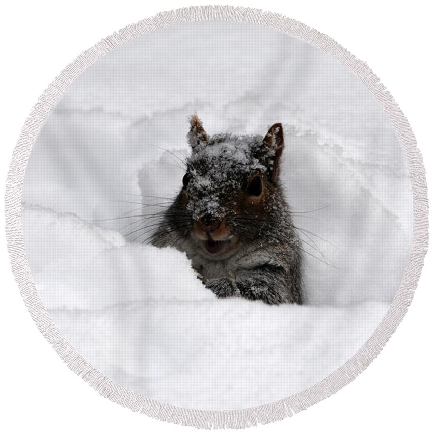 Nature Round Beach Towel featuring the photograph Pretty Cool Cat... by Mike Martin