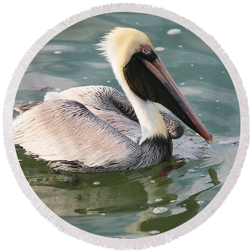 Pelican Round Beach Towel featuring the photograph Pretty Pelican In Pond by Carol Groenen