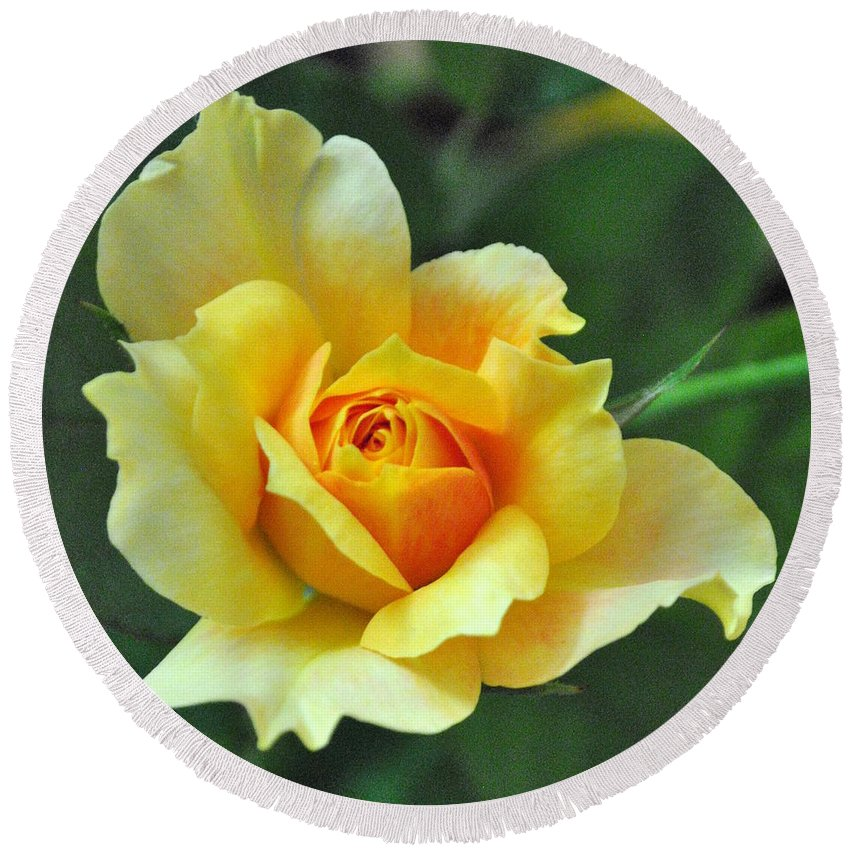 Yellow Round Beach Towel featuring the photograph Pretty Petals by Charlotte Stevenson