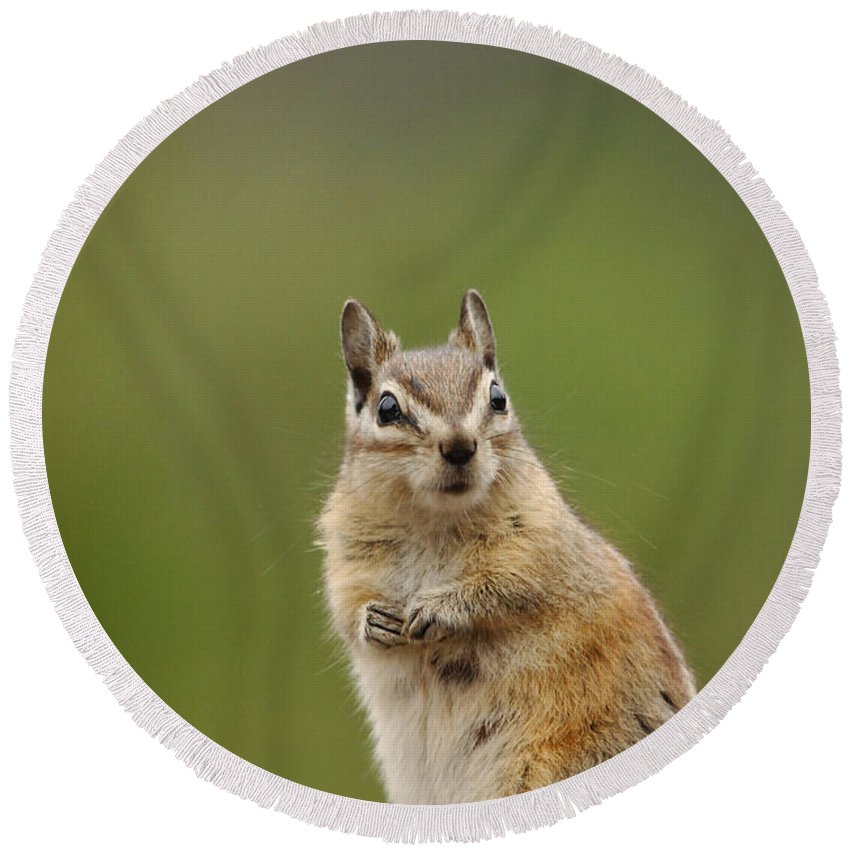 Squirrel Round Beach Towel featuring the photograph Pretty Please by Donna Blackhall
