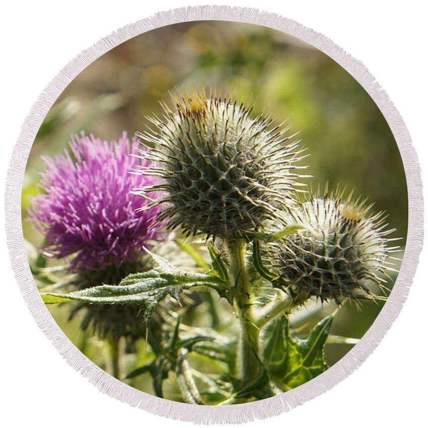 Thistle Round Beach Towel featuring the photograph Prickly Youth by Elena Perelman