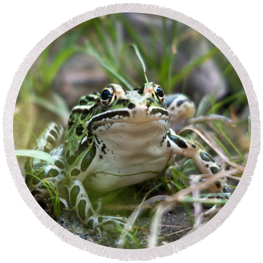 Leopard Frog Round Beach Towel featuring the photograph Prince For A Kiss by Cheryl Baxter