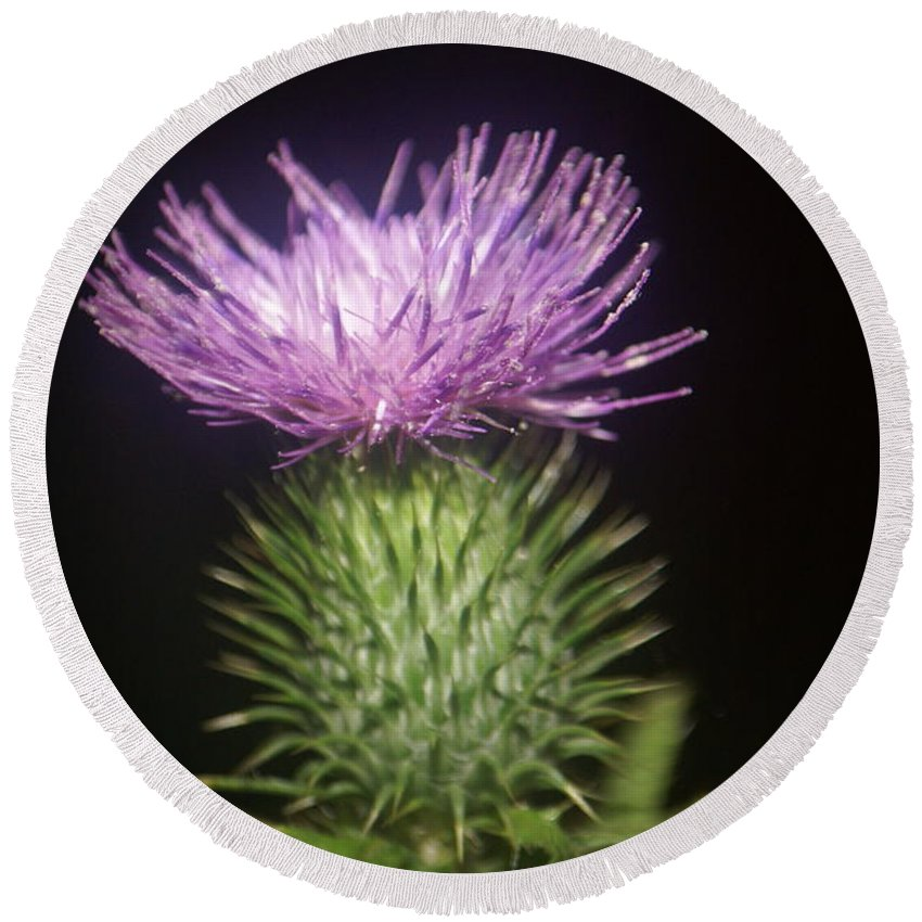 Side Round Beach Towel featuring the photograph Profile Of Pruple Thistle by Rob Luzier