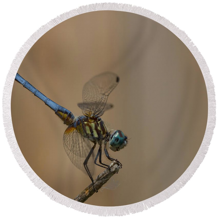 Dragonfly Art Round Beach Towel featuring the photograph Profile Of The Dragonfly by Kim Henderson