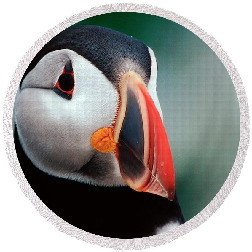 Atlantic Puffin Round Beach Towel featuring the photograph Puffin Head Shot by Jerry Fornarotto