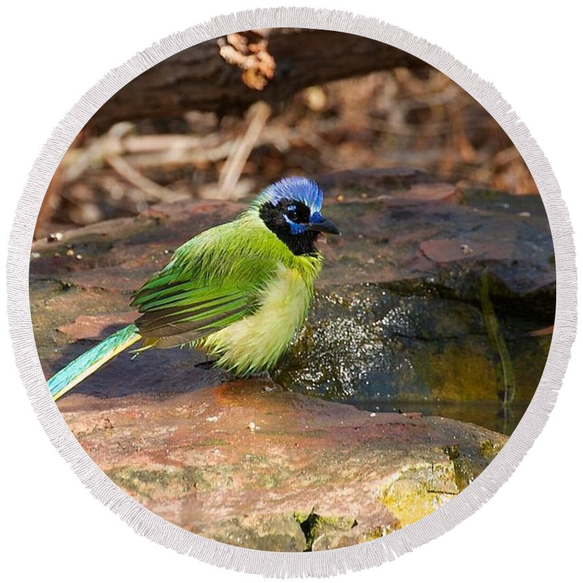 Green Jay Round Beach Towel featuring the photograph Puffy Green Jay by Stuart Litoff