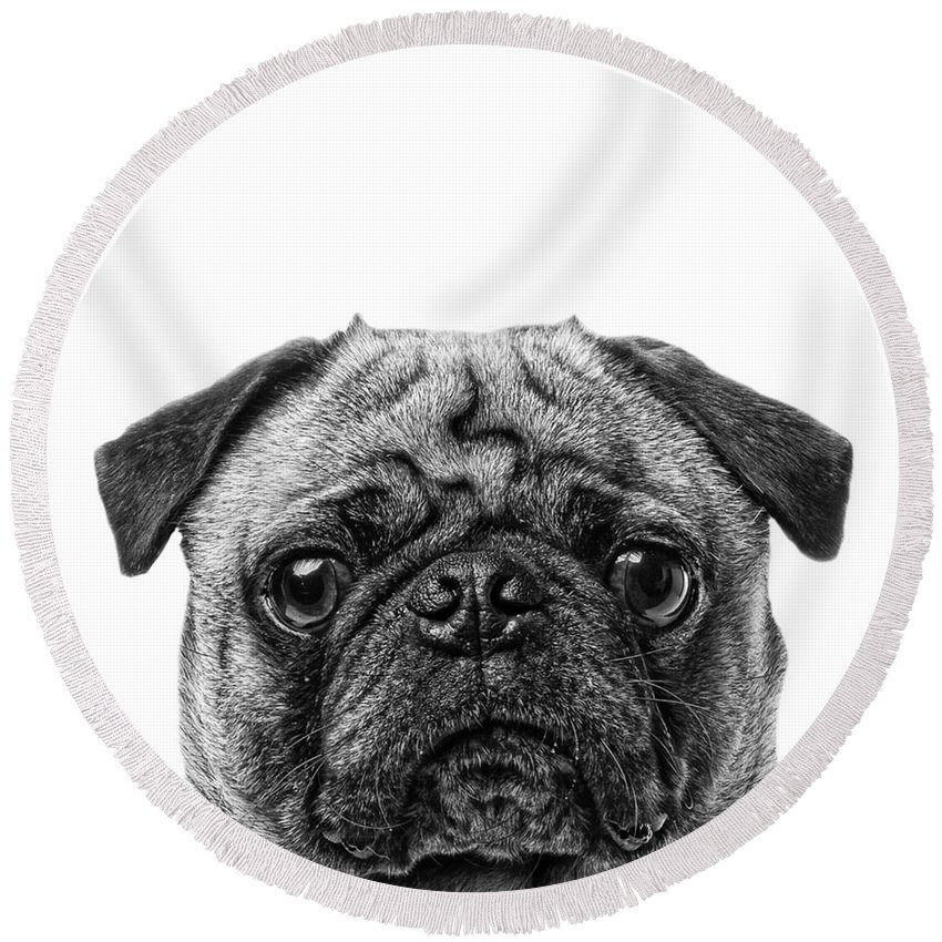 Graphic Round Beach Towel featuring the photograph Pug Dog Square Format by Edward Fielding