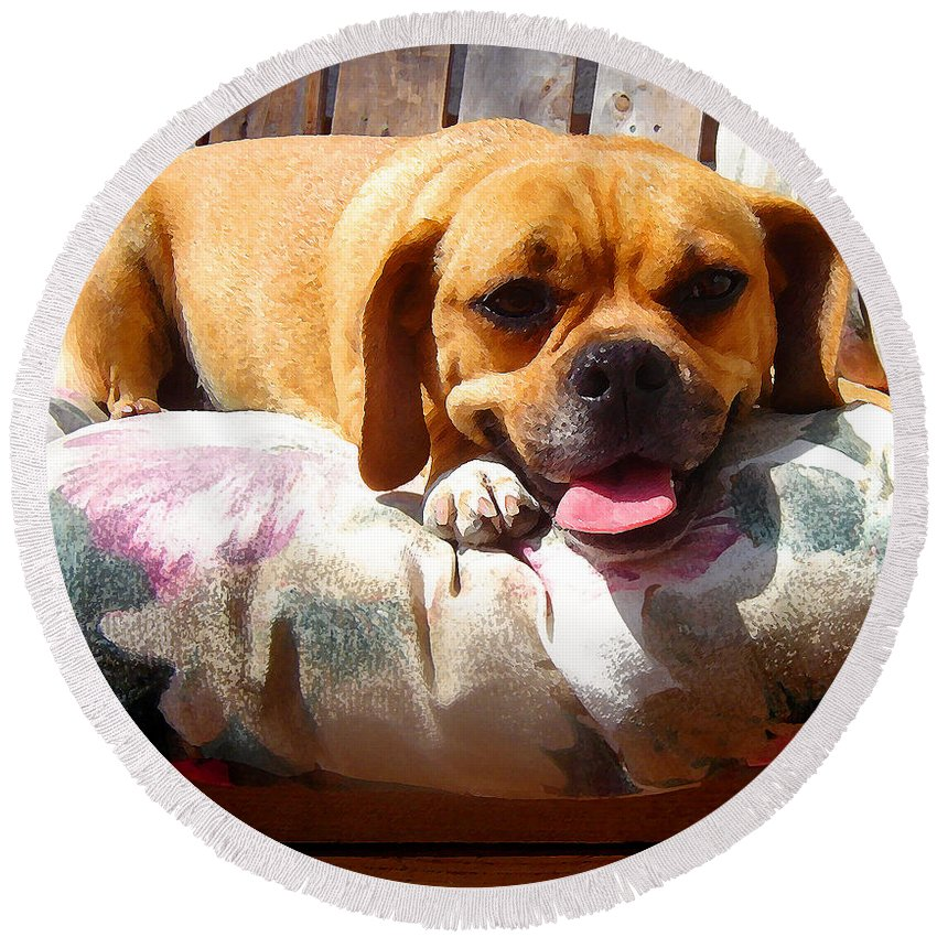 Animal Round Beach Towel featuring the painting Puggle Lounging by Amy Vangsgard