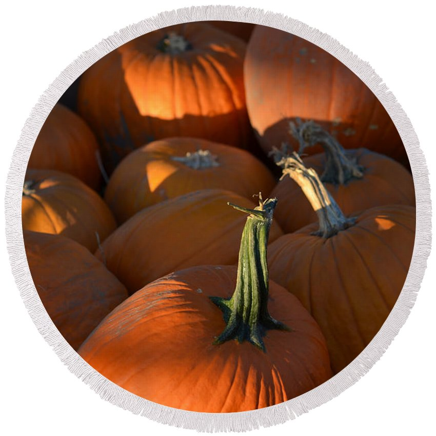 Pumpkins Round Beach Towel featuring the photograph Pumpkin Patch by Toby McGuire