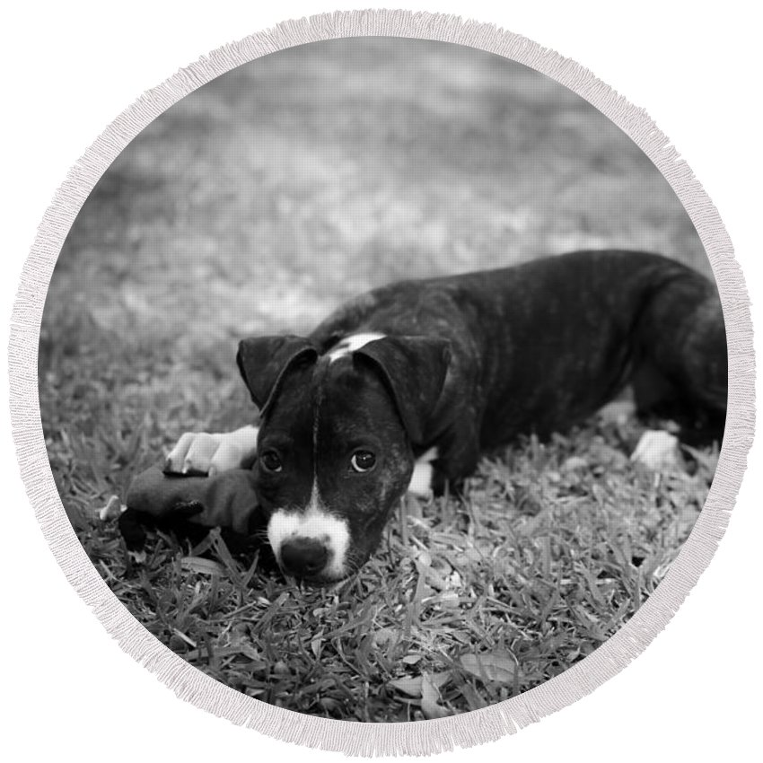 Black And White Round Beach Towel featuring the photograph Puppy Eyes In Black And White by David Morefield