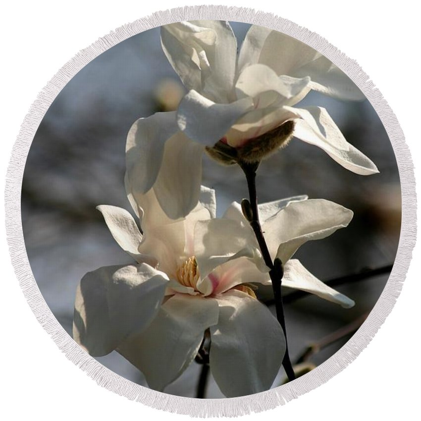 Magnolia Round Beach Towel featuring the photograph Purity by Living Color Photography Lorraine Lynch