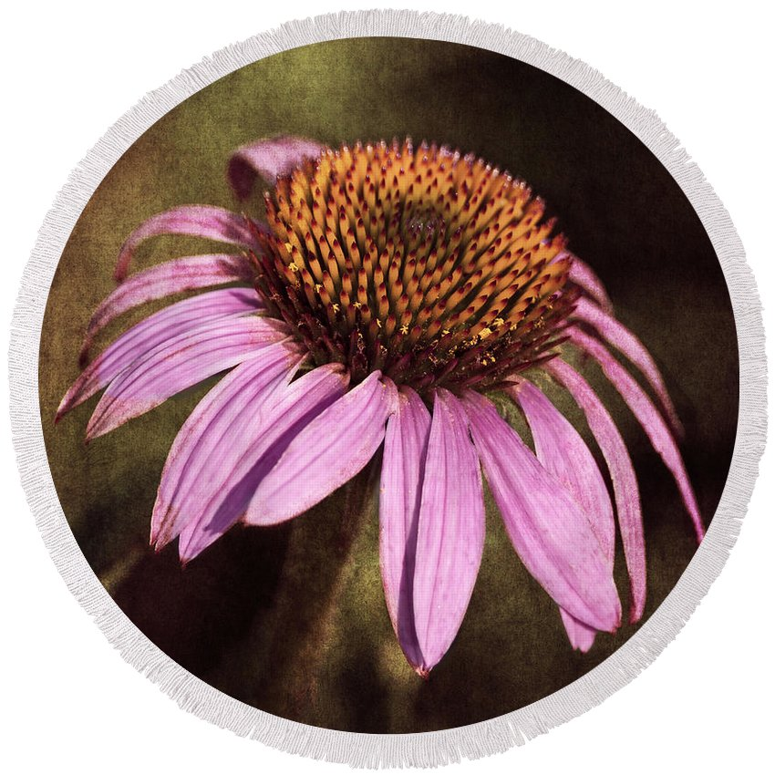 Purple Cone Flower Round Beach Towel featuring the photograph Purple Cone Flower II by Dale Kincaid