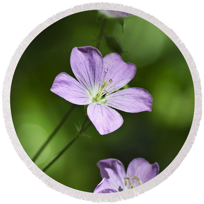 Geranium Round Beach Towel featuring the photograph Purple Geranium Flowers by Christina Rollo