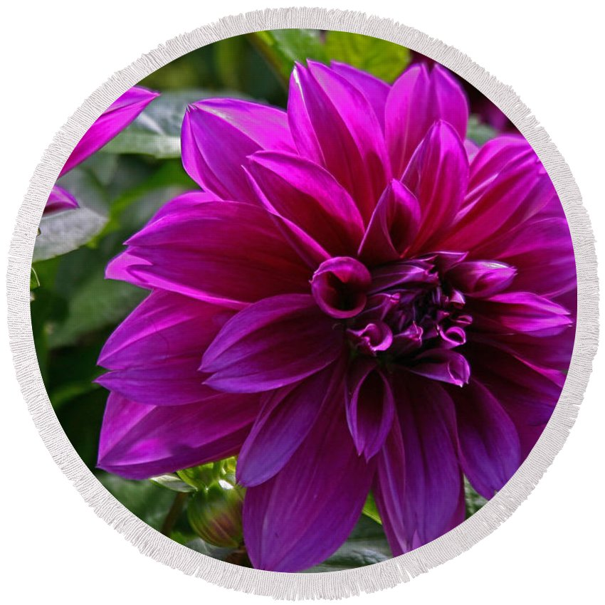 Flowers Round Beach Towel featuring the photograph Purple by Hugh Carino