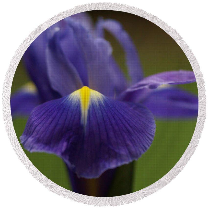 Purple Round Beach Towel featuring the photograph Purple Iris 6 by Carol Lynch