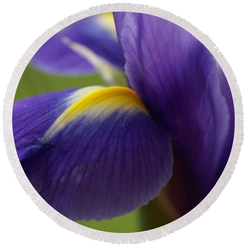 Purple Round Beach Towel featuring the photograph Purple Iris 8 by Carol Lynch