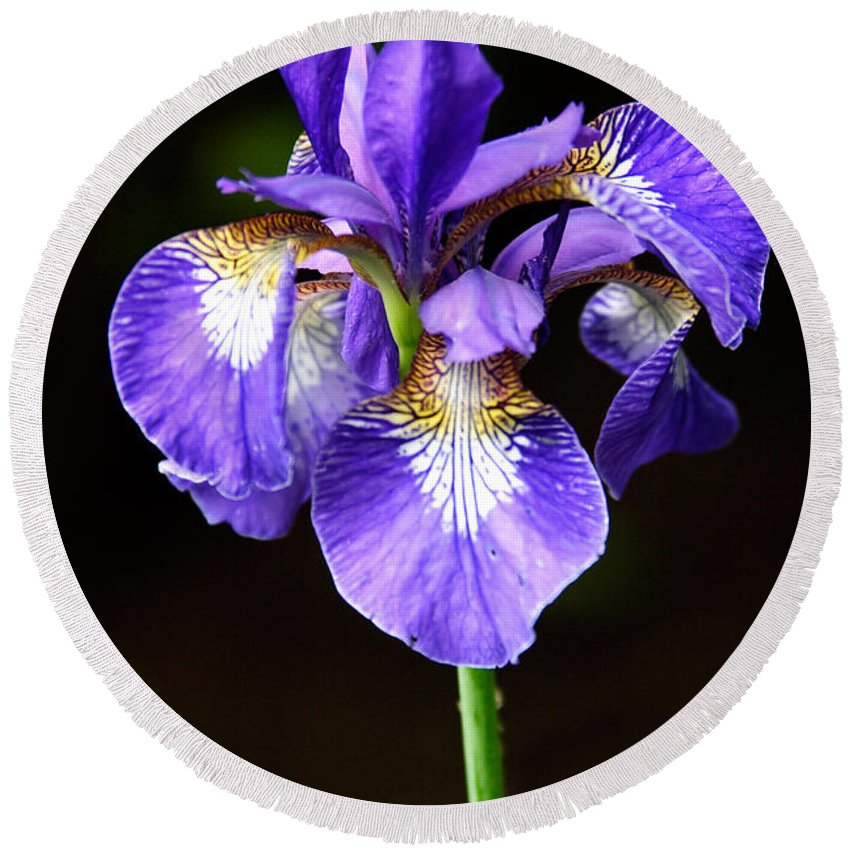 3scape Round Beach Towel featuring the photograph Purple Iris by Adam Romanowicz