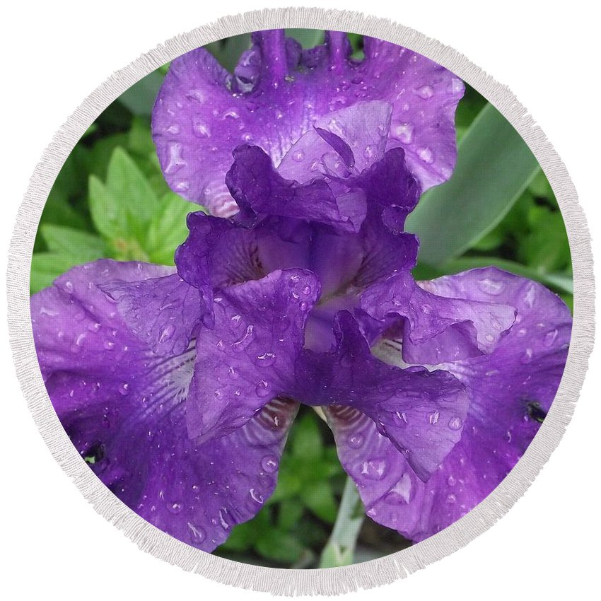 Purple Flower Round Beach Towel featuring the photograph Purple Iris After The Rain by Michelle Welles