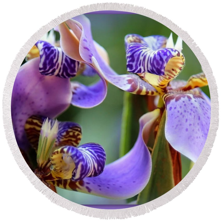 Blue Flowers Round Beach Towel featuring the photograph Purple Irises Closeup by Carol Groenen