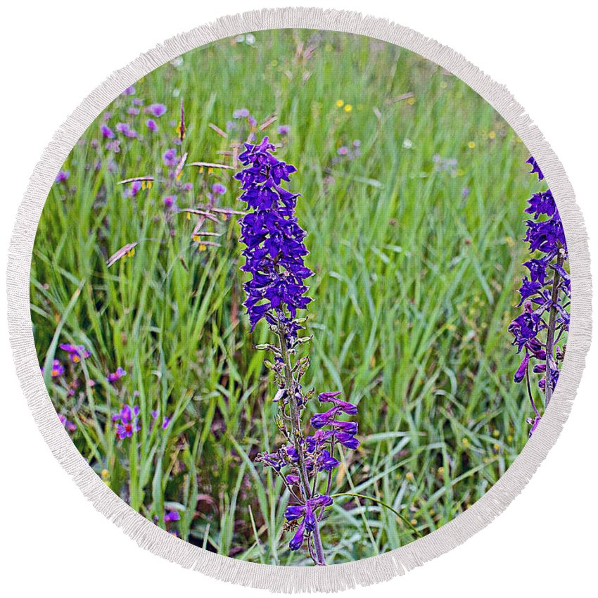 Purple Larkspur In The Meadow In Yellowstone National Park-wyoming Round Beach Towel featuring the photograph Purple Larkspur In A Meadow In Yellowstone National Park-wyoming by Ruth Hager