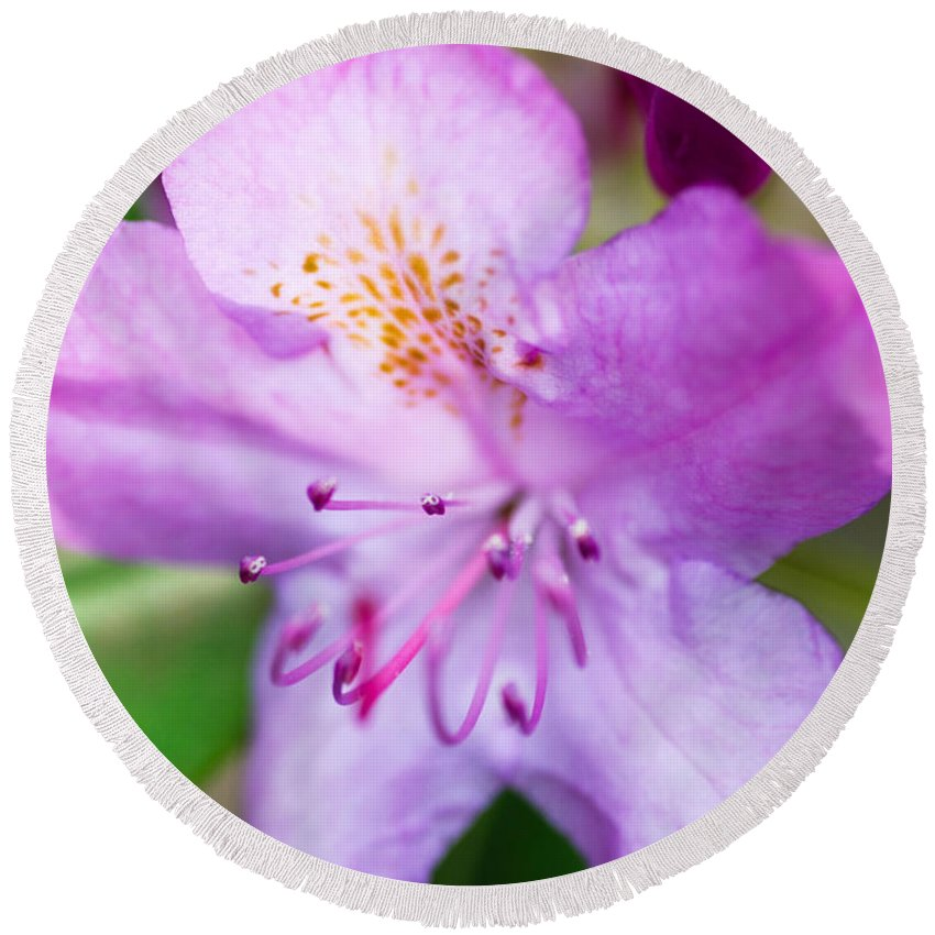 Purple Flower Round Beach Towel featuring the photograph Purple Long Pistil Flower by Optical Playground By MP Ray