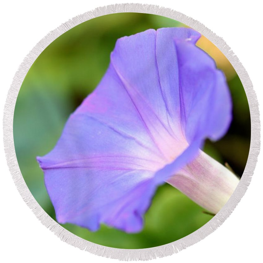 Beauty Round Beach Towel featuring the photograph Purple Morning Glory by Henrik Lehnerer