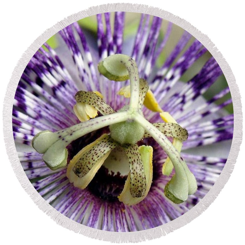 Flower Round Beach Towel featuring the photograph Purple Passion Flower Close Up by Taiche Acrylic Art