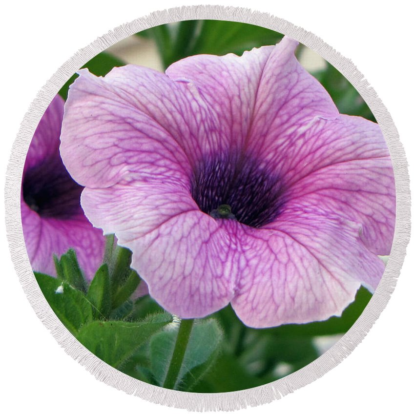 Flower Round Beach Towel featuring the photograph Purple Petunia by Tikvah's Hope