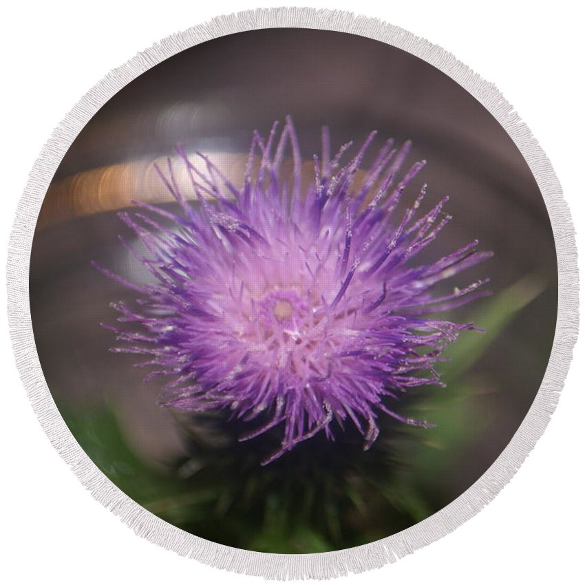 Close Up Round Beach Towel featuring the photograph Purple Thistle by Rob Luzier