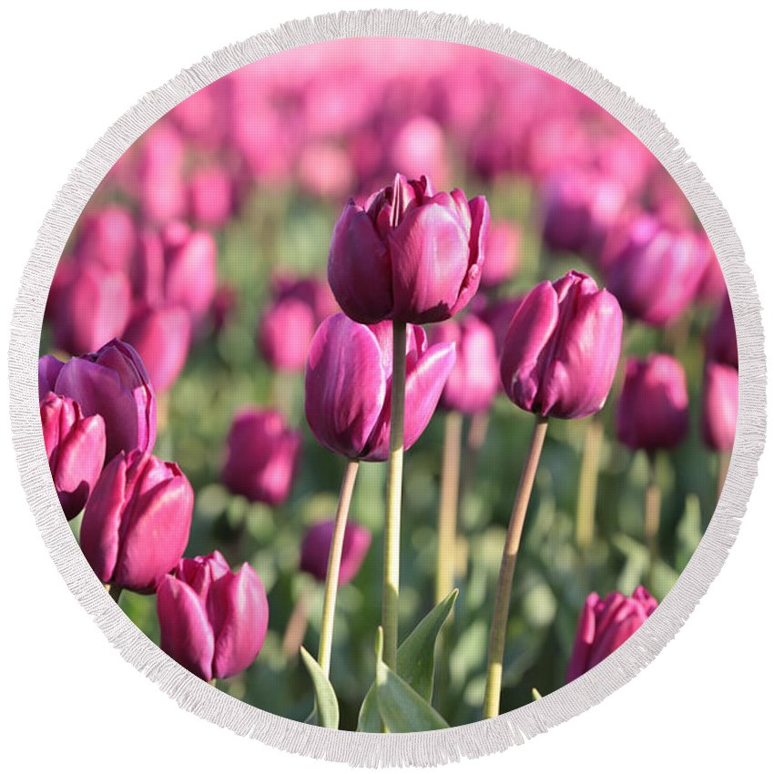 Tulip Round Beach Towel featuring the photograph Purple Tulip Standouts by Carol Groenen