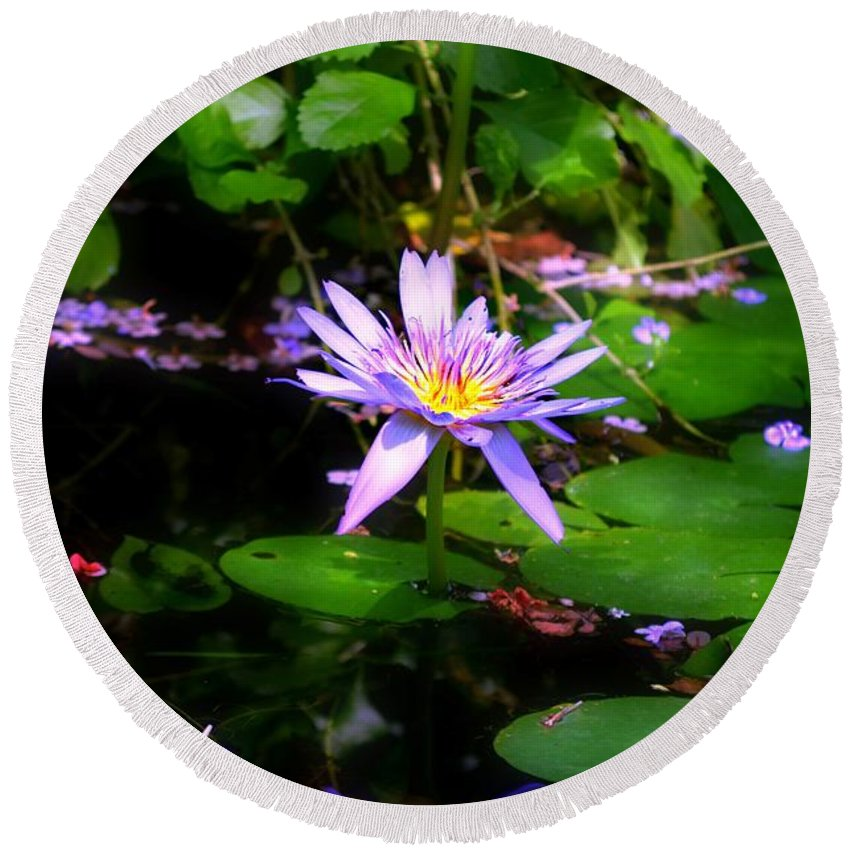 Purple Water Lilly Round Beach Towel featuring the photograph Purple Water Lilly by Peggy Franz