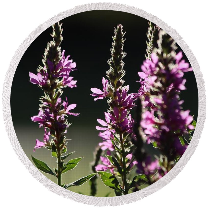 Wild Round Beach Towel featuring the photograph Purple Wild Flowers - 1 by Kenny Glotfelty