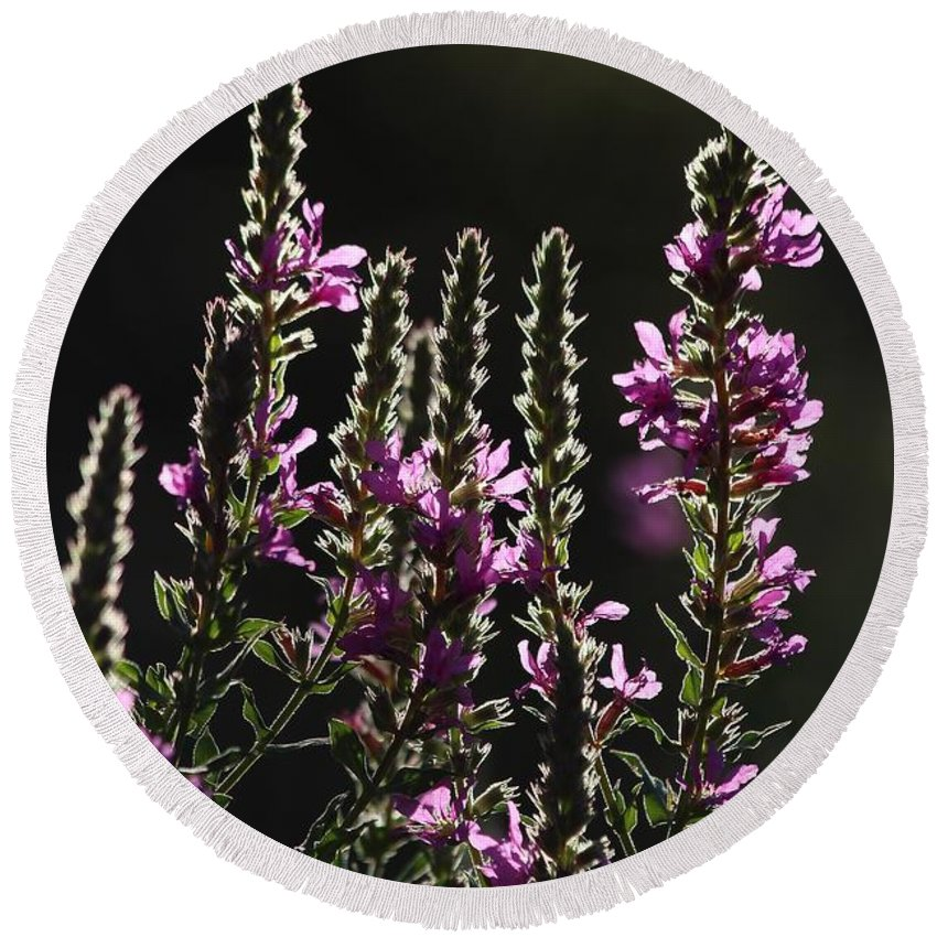 Wild Round Beach Towel featuring the photograph Purple Wild Flowers - 2 by Kenny Glotfelty