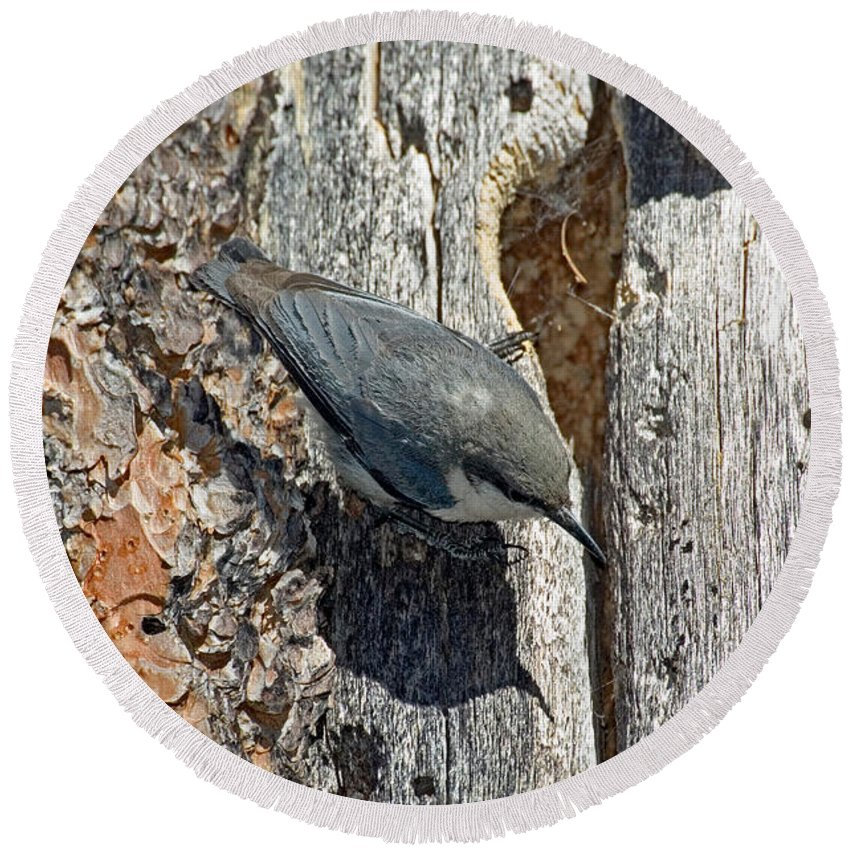 Animal Round Beach Towel featuring the photograph Pygmy Nuthatch At Nest by Anthony Mercieca
