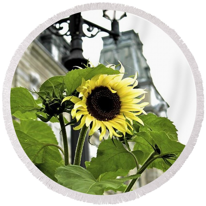 Sunflower Round Beach Towel featuring the photograph Qcpg 13-013 by Mario MJ Perron